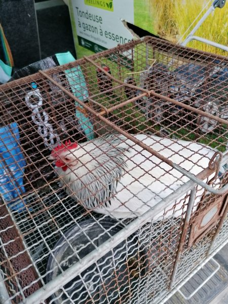 Distribution volailles de bourbourg